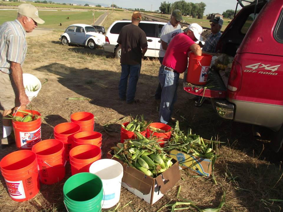corn picking 2013 2.jpg